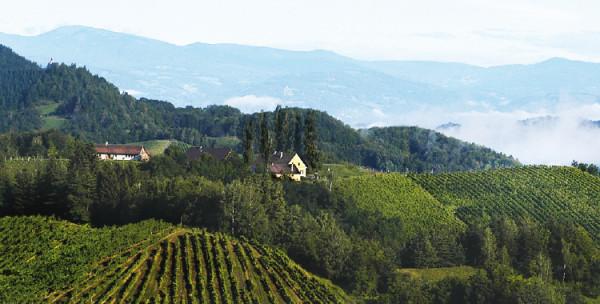 WeingutMaria-SeppMuster