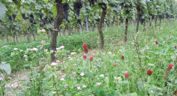In-vino-veri-was-WeinabendWeinbergJ-Beck